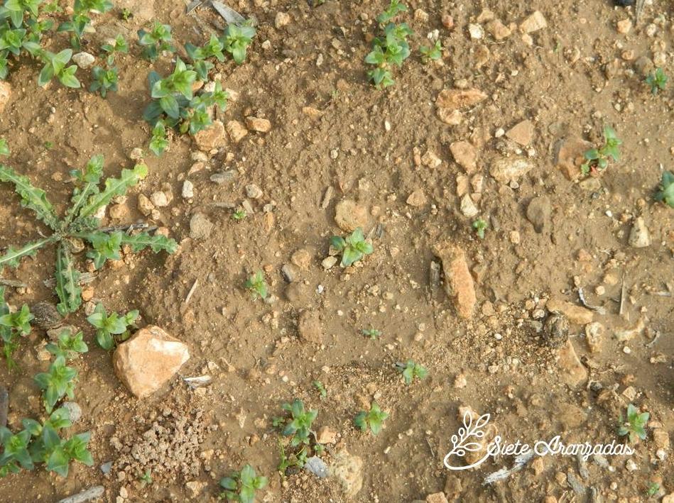 suelo libre de pesticidas